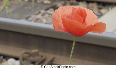Nature Pull Focus Dainty Poppy Flower to Train Track Rail -...