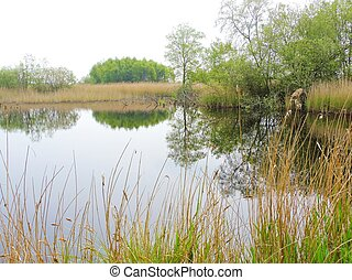 Nature Reserve. - A nature reserve from the Avalon Marshes ...