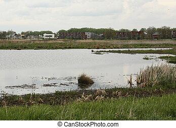"Nature reserve ""De Onlanden"" near the city of Groningen. The Netherlands"