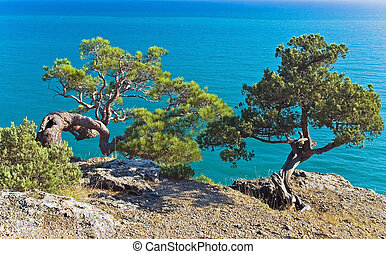 Nature reserve Novy Svet, Crimea.