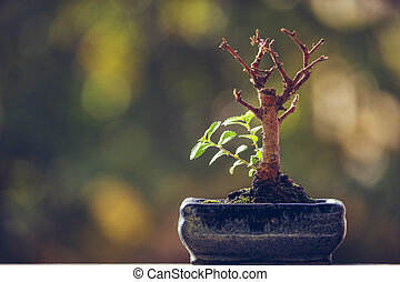 Nature revival power - Dry bonsai tree trunk in a pot with...