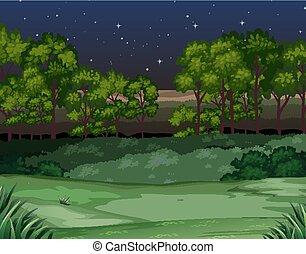 Nature scene at night