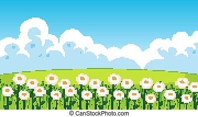 Nature scene background with white flowers in the field