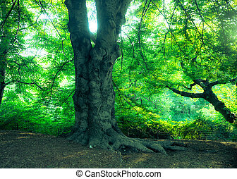 Nature scene with trees in summertime