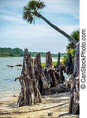 nature scenes around hunting island south carolina