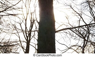 sunlight breaking through winter tree branches - nature, ...