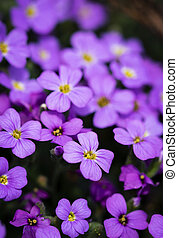 a group of small purple flowers