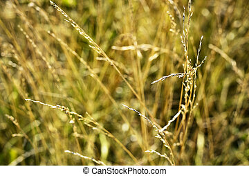 Blurred yellow grass in the wind