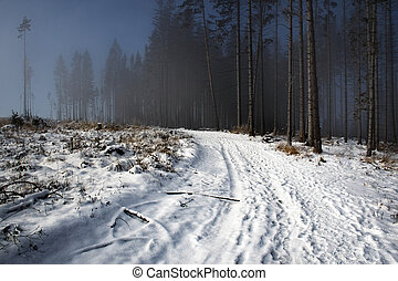 fog on the edge of the winter spruce forest