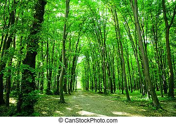 nature., skog
