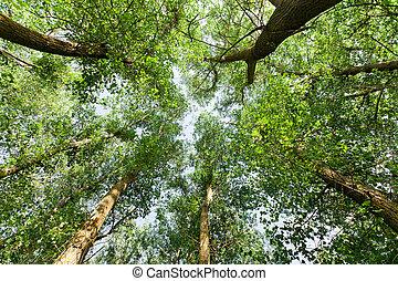 nature., skov