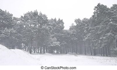 nature snowstorm the woods blizzard snowing winter,...