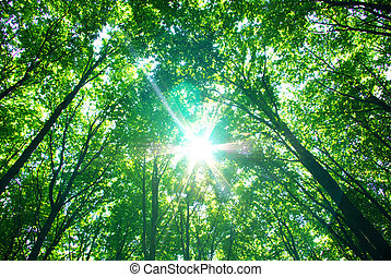 nature - Early morning sun in the green forest