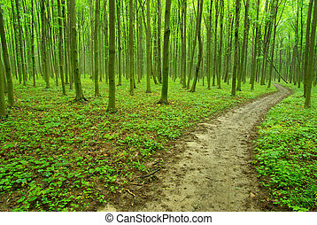 nature - green forest background in sunny day