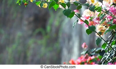 nature - tropical climate