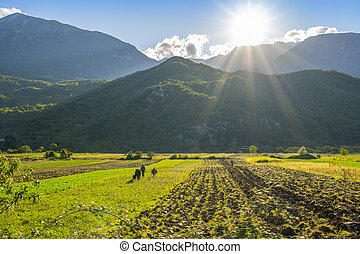 Nature, summer landscape in albanian mountains