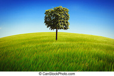 Nature Summer Landscape with Lonely Tree