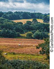nature summer panorama