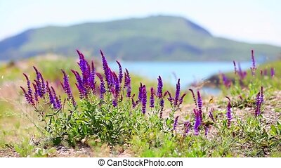 Nature summer violet grass - Violet flowers close-up real...