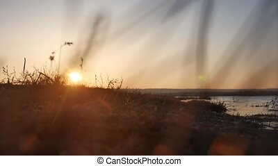 nature sunset. Sea waves, river grass swaying in the wind on a beautiful sunset silhouette nature
