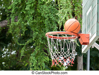 Nature surrounding basketball hoop