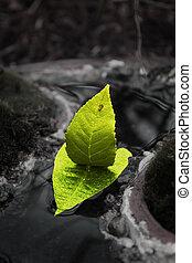 boat of leaves sailing in mini river