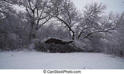 nature, tempête neige, beau, noël
