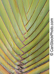 Nature texture of green Palm stalk leave use for background