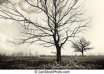 nature., tot, einsam, kunst, bäume.