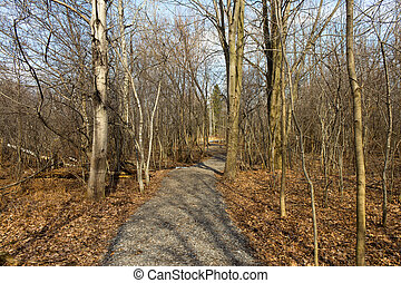 Nature trail in the park