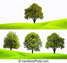 Nature tree background