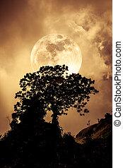 nature, vendange, sur, tone., arbre, contre, arrière-plan., silhouettes, sea., tranquille, ciel