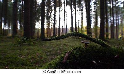nature., vert, pur, -, forêt