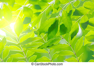 nature view of green leaf abstract background