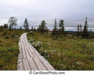 Nature walk in Lapland