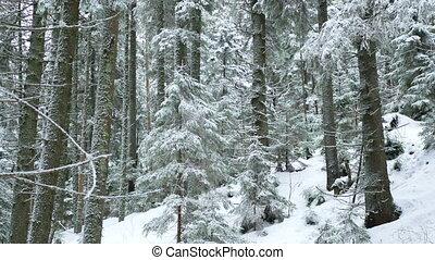 Nature winter branch snow - Snow trees winter beautiful...