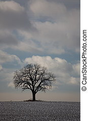 nature winter tree 01