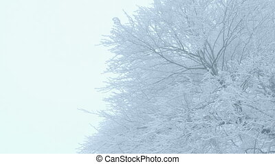 Nature - Winter Trees