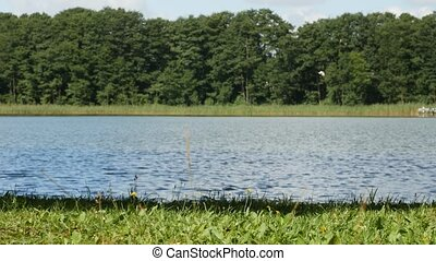 Nature with a calm surface of clear lake water and green plants