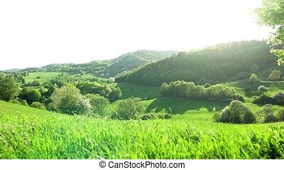 nature., woodland., панорамный, закат солнца, луга, пейзаж, ...