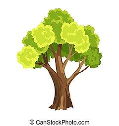 naturel, aquarelle, foliage., leafage., résumé, illustration, stylisé, arbre., arbre vert