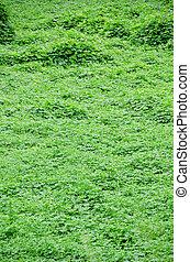 naturel, arrière-plan vert