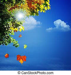 naturel, automne, résumé, Arrière-plans, conception, ton