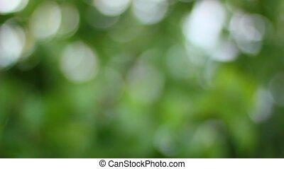 naturel, bokeh, arrière-plan vert