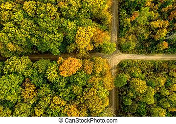 naturel, directement, regarde, aimer, croisement, drapeau, forêt automne, above., bourdon, coup