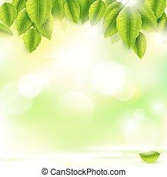 naturel, feuilles, ensoleillé, arrière-plan vert, frais, résumé