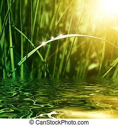 naturel, fond, vert
