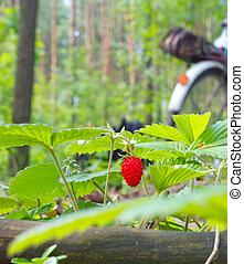 naturel, fraise, environnement, baie sauvage, croissant