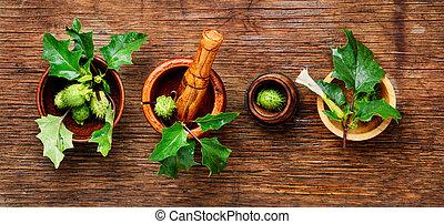 naturel, herbes, médecine, datura