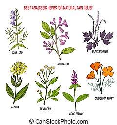 naturel, herbes, soulagement, analgésique, douleur, mieux